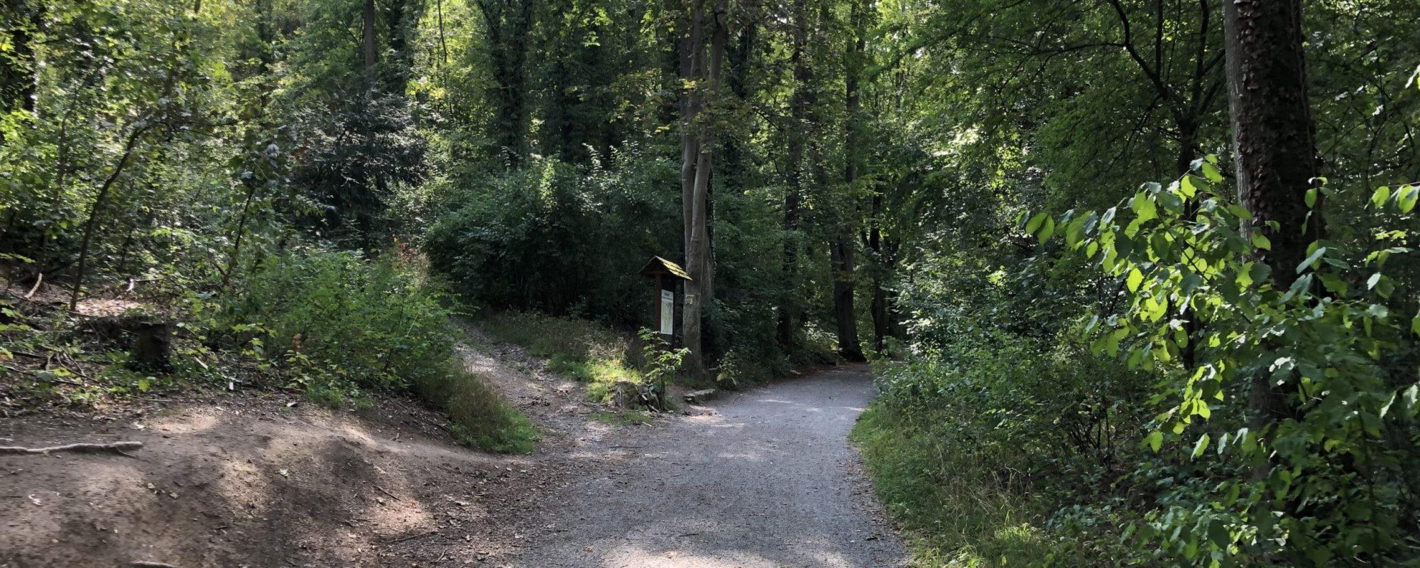 Waldwanderweg im Steinbachtal